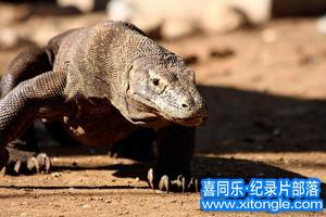 williamhill中文部落-williamhill中文从业者门户:BBCwilliamhill中文:死亡之吻-科莫多巨蜥 Komodo The Deadly Bite 中文字幕高清下载-williamhill中文部 ...