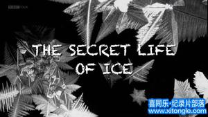 williamhill中文部落-williamhill中文从业者门户:BBCwilliamhill中文下载-冰的秘密生活The Secret Life of Ice (2011)