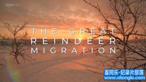 williamhill中文部落-williamhill中文从业者门户:BBCwilliamhill中文 - 全部:大驯鹿移民(2018年)The Great Reindeer Migration